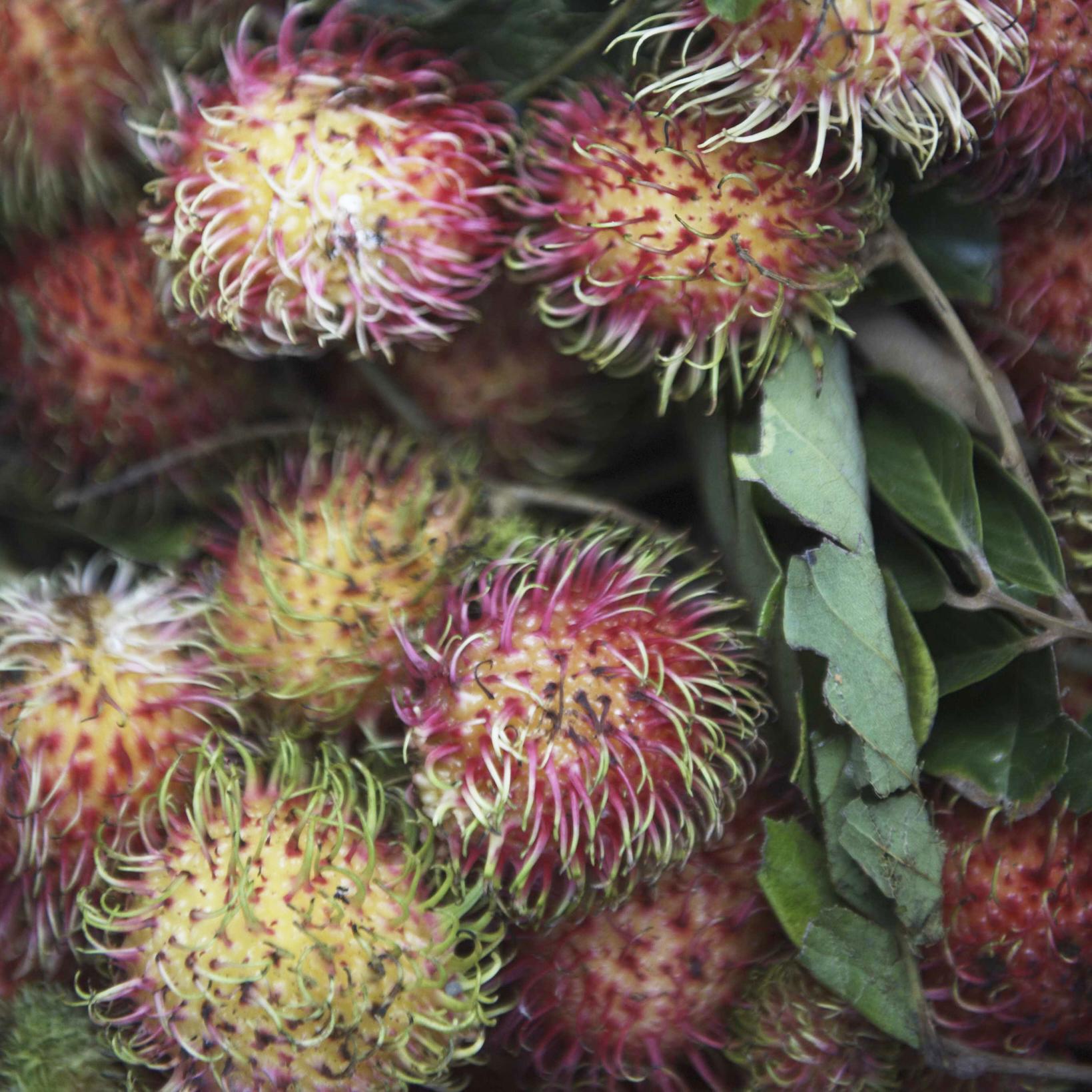 Sentosa-Sulawesi-St.-26-11-09-000138